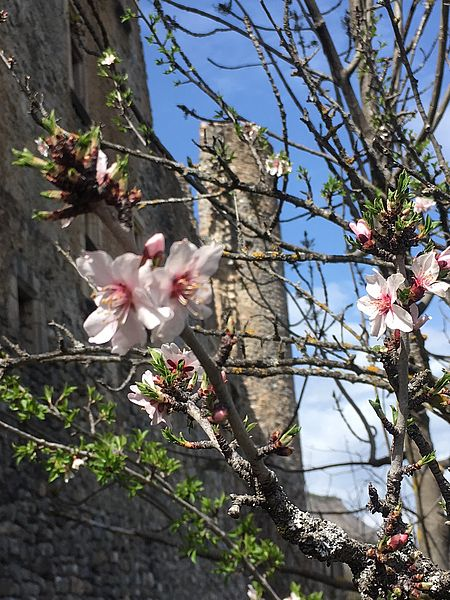 Tallard Castle in spring