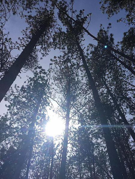 Forêt du parc de la Garenne à Tallard
